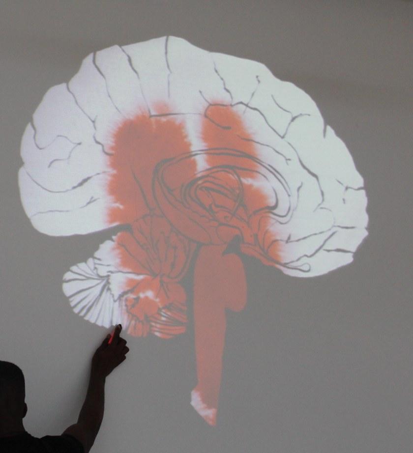 joannalayla amygdala 3