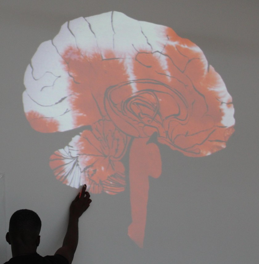 joannalayla amygdala 6