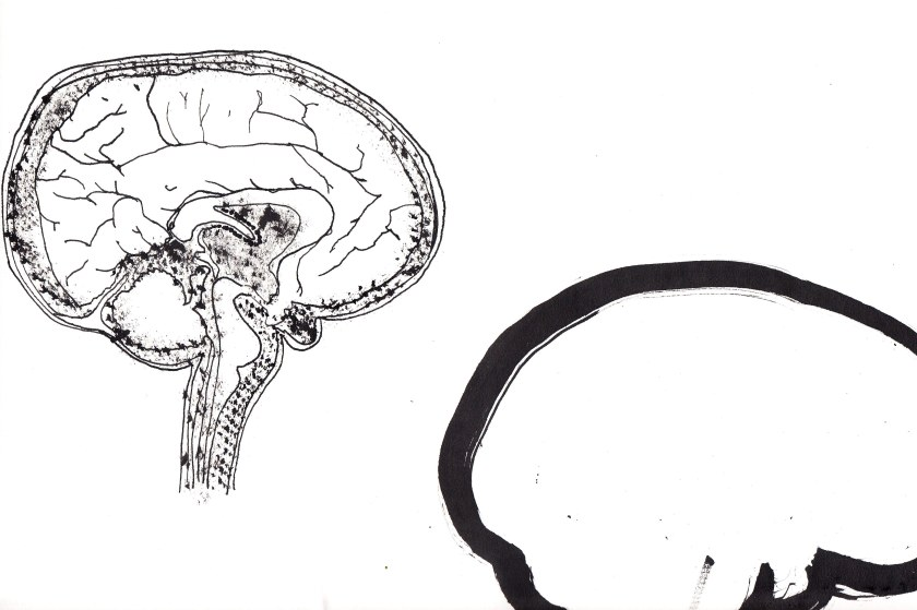 joannalayla brain 4