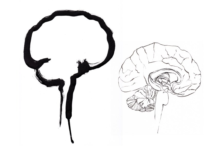 joannalayla brain perspective 1