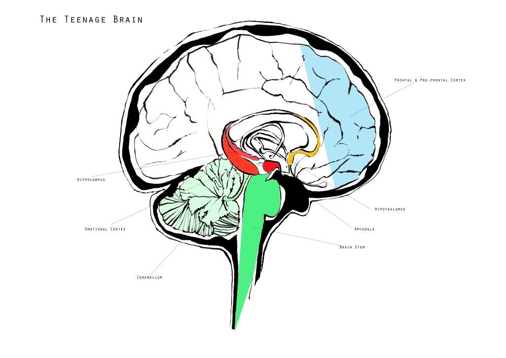 joannalayla brain school diagram